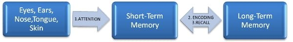 Long-term-Memory-Process